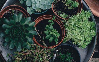 Olika sätt att inreda med växter