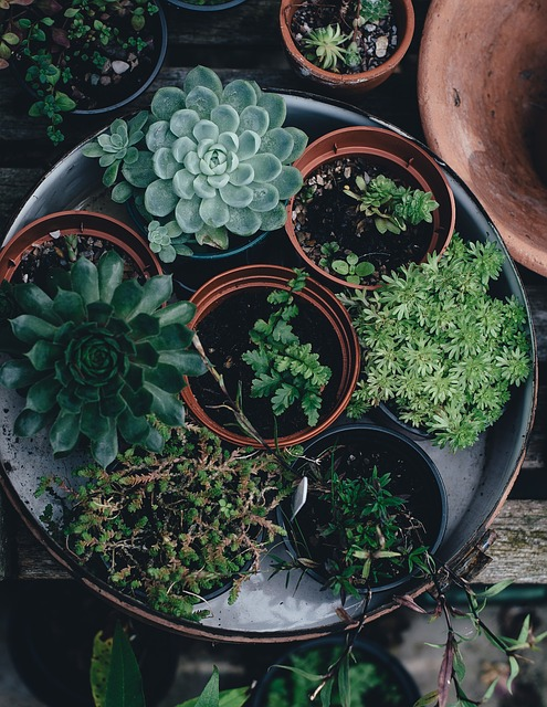 blandade-plantor